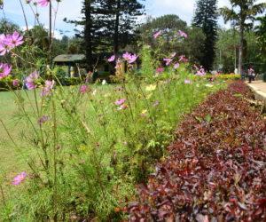 Anna Park (Botanical Garden)