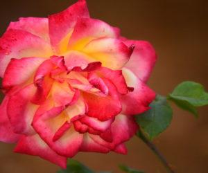 Rose Garden and Silk Farm