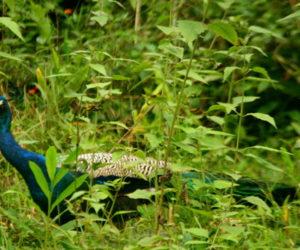 Tholpetty Wildlife Sanctuary