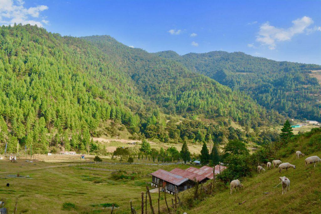 Sheep Farm, Sangti Valley, Dirang, Arunachal Pradesh